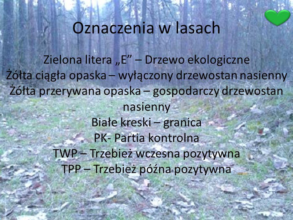 """Oznaczenia w lasach Zielona litera """"E"""" – Drzewo ekologiczne Żółta ciągła opaska – wyłączony drzewostan nasienny Żółta przerywana opaska – gospodarczy"""