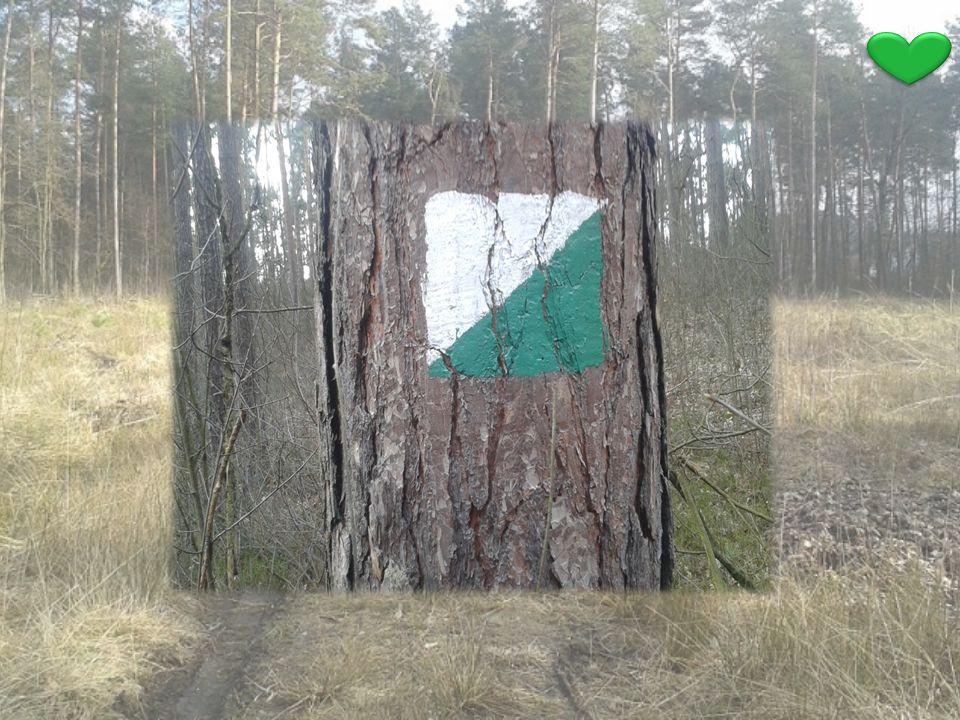 Pamiętaj .Chroń nasze mieleckie lasy, nie bądź obojętny .