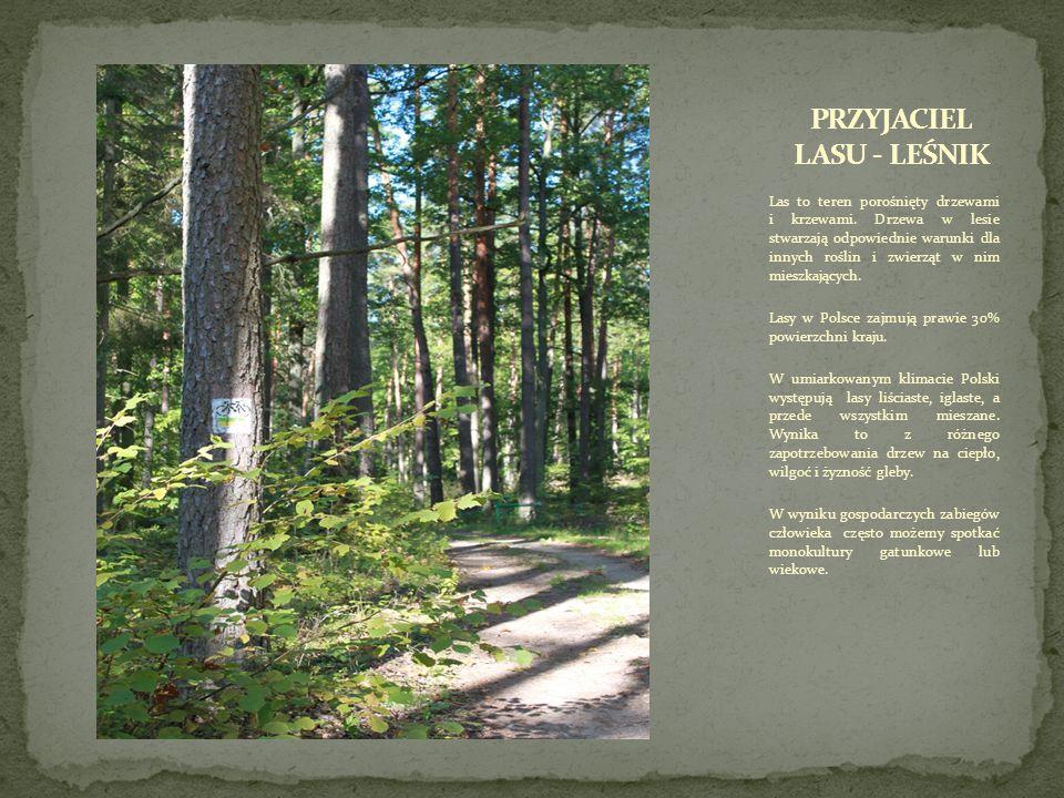 Las to teren porośnięty drzewami i krzewami.