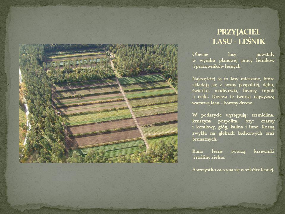 Obecne lasy powstały w wyniku planowej pracy leśników i pracowników leśnych.