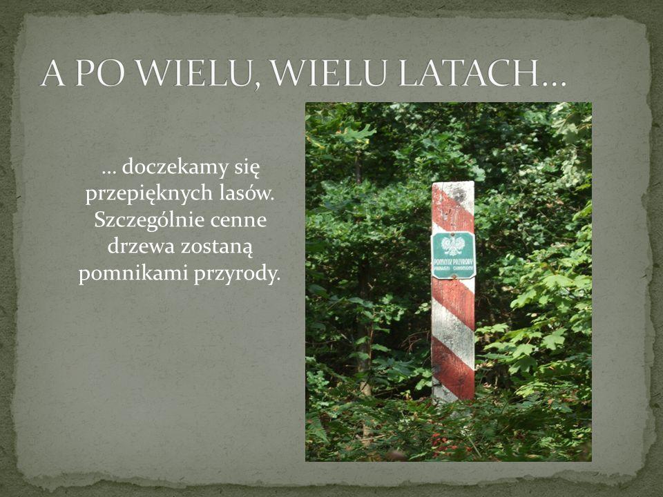 … doczekamy się przepięknych lasów. Szczególnie cenne drzewa zostaną pomnikami przyrody.