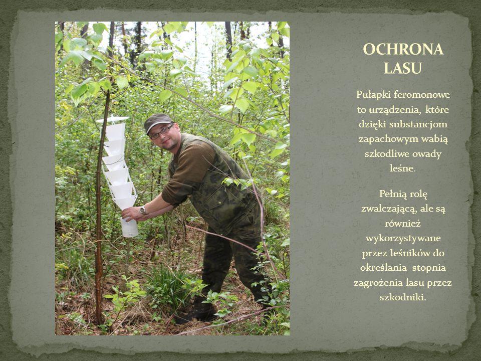 Pułapki feromonowe to urządzenia, które dzięki substancjom zapachowym wabią szkodliwe owady leśne.