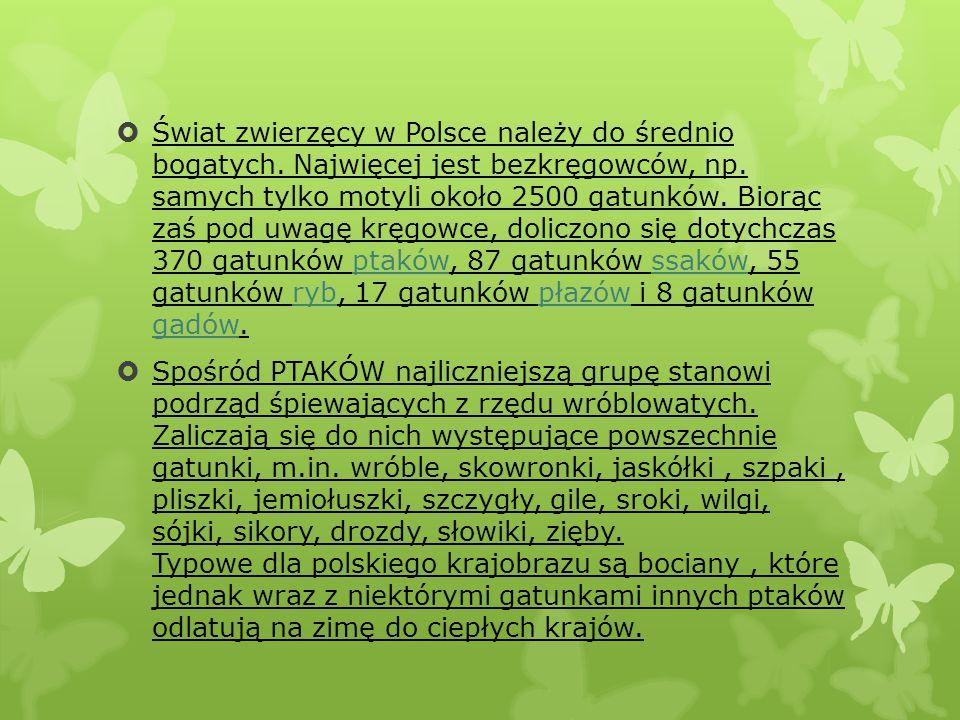  Świat zwierzęcy w Polsce należy do średnio bogatych. Najwięcej jest bezkręgowców, np. samych tylko motyli około 2500 gatunków. Biorąc zaś pod uwagę