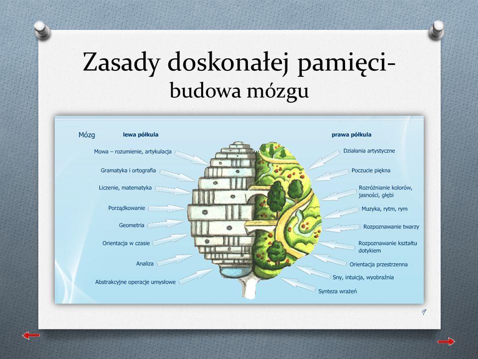 Zasady doskonałej pamięci- budowa mózgu 9