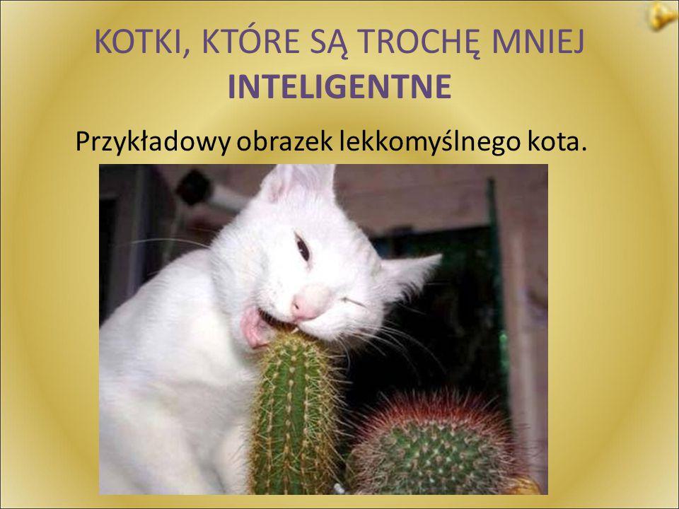 KOTKI, KTÓRE SĄ TROCHĘ MNIEJ INTELIGENTNE Przykładowy obrazek lekkomyślnego kota.