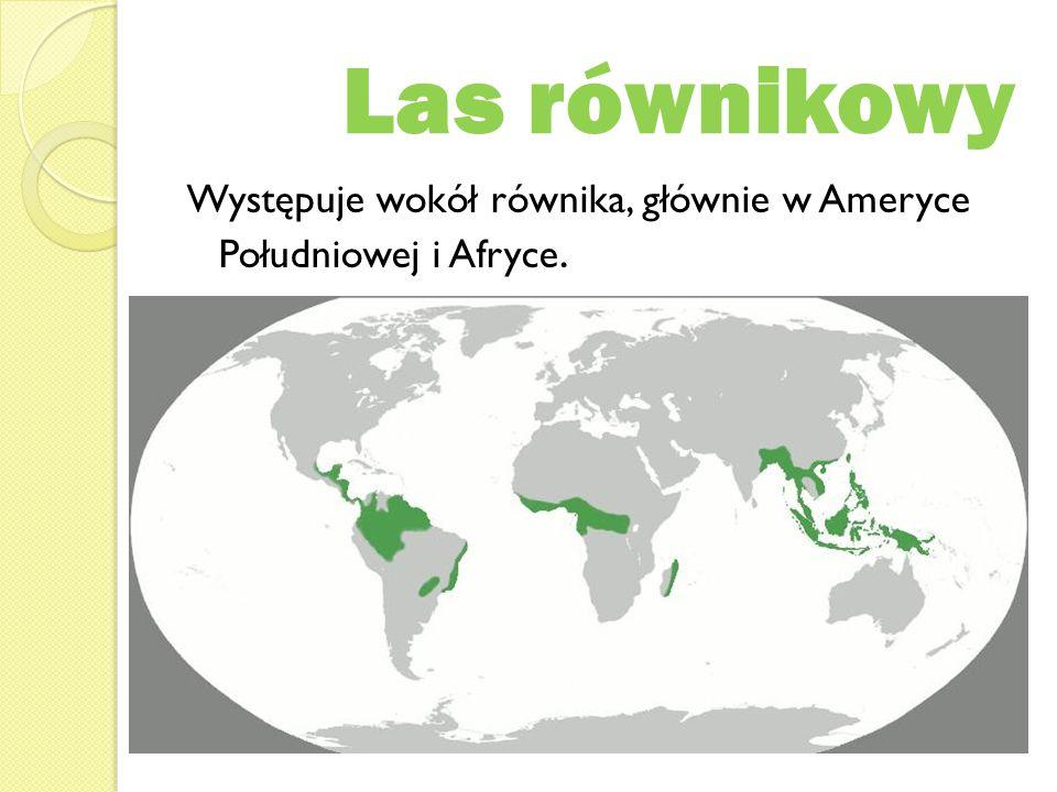 Las równikowy Występuje wokół równika, głównie w Ameryce Południowej i Afryce.
