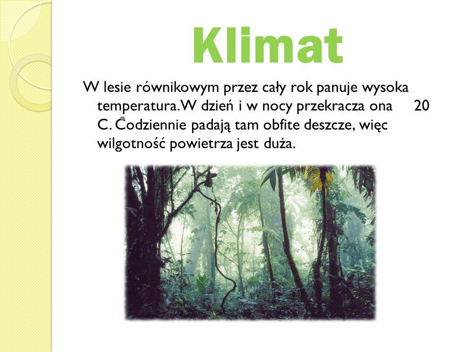 Klimat W lesie równikowym przez cały rok panuje wysoka temperatura. W dzień i w nocy przekracza ona 20 C. Codziennie padają tam obfite deszcze, więc w