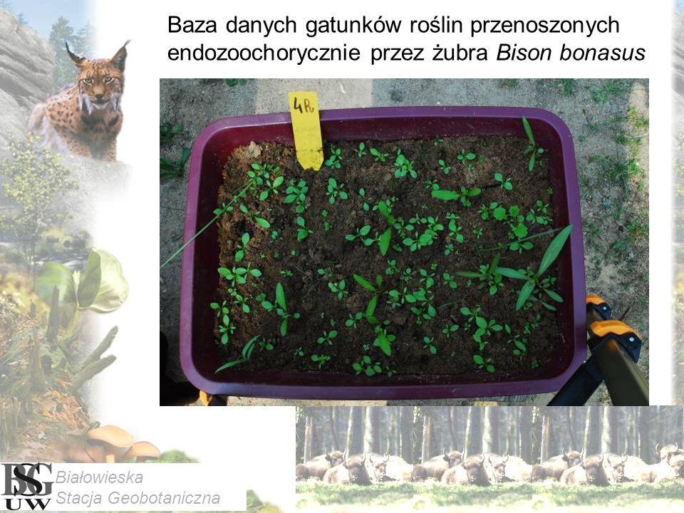 Baza danych gatunków roślin przenoszonych endozoochorycznie przez żubra Bison bonasus Białowieska Stacja Geobotaniczna