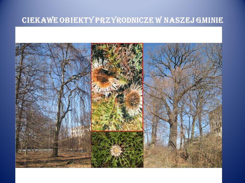 Ciekawe obiekty przyrodnicze w naszej gminie