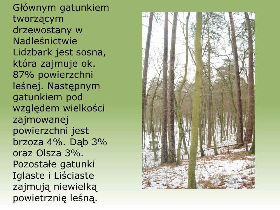 Głównym gatunkiem tworzącym drzewostany w Nadleśnictwie Lidzbark jest sosna, która zajmuje ok.