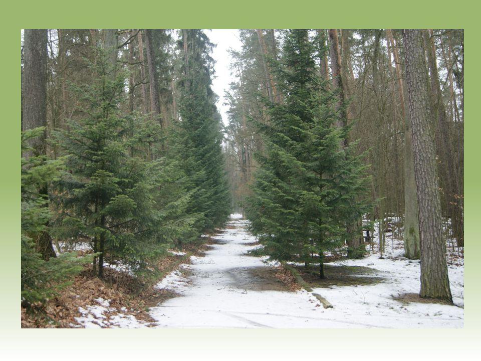 Przy siedzibie nadleśnictwa znajduje się leśna ścieżka dydaktyczna.