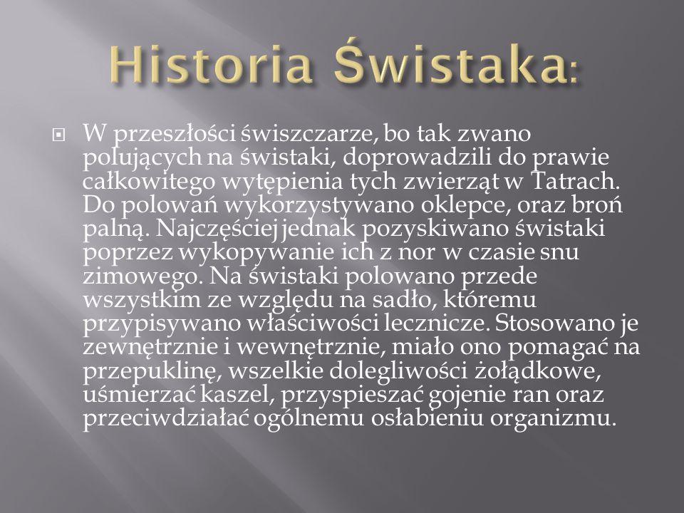  W przeszłości świszczarze, bo tak zwano polujących na świstaki, doprowadzili do prawie całkowitego wytępienia tych zwierząt w Tatrach. Do polowań wy
