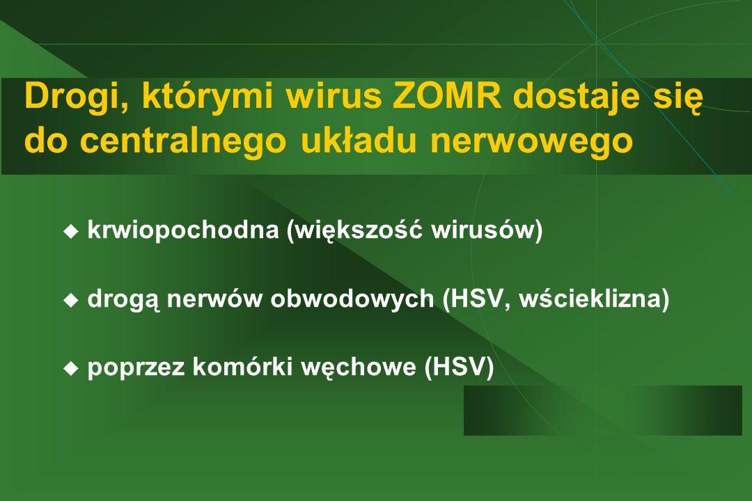 Drogi, którymi wirus ZOMR dostaje się do centralnego układu nerwowego  krwiopochodna (większość wirusów)  drogą nerwów obwodowych (HSV, wścieklizna)  poprzez komórki węchowe (HSV)
