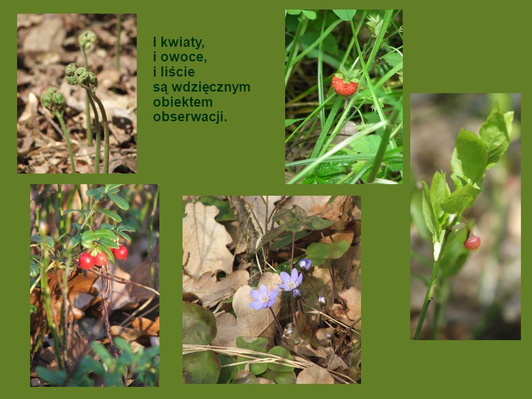 I kwiaty, i owoce, i liście są wdzięcznym obiektem obserwacji.