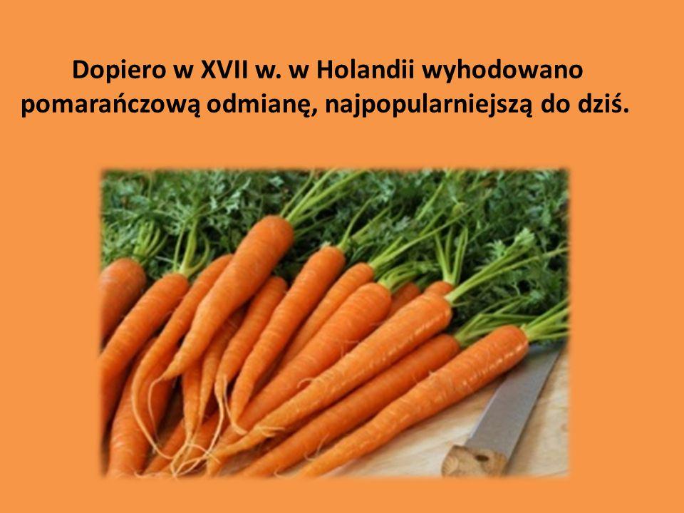 Dopiero w XVII w. w Holandii wyhodowano pomarańczową odmianę, najpopularniejszą do dziś.
