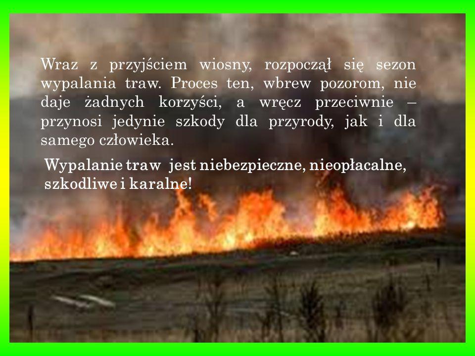 Pożar traw oznacza zniszczenie miejsc lęgowych wielu gatunków gnieżdżących się na ziemi i w krzewach ptaków.