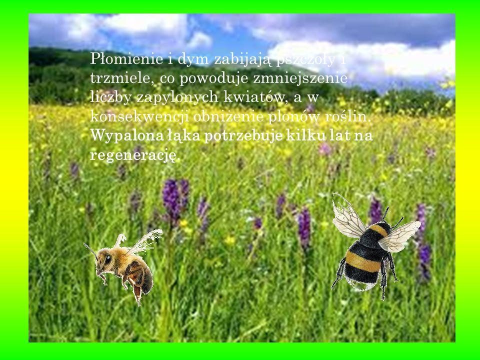Płomienie i dym zabijają pszczoły i trzmiele, co powoduje zmniejszenie liczby zapylonych kwiatów, a w konsekwencji obniżenie plonów roślin. Wypalona ł