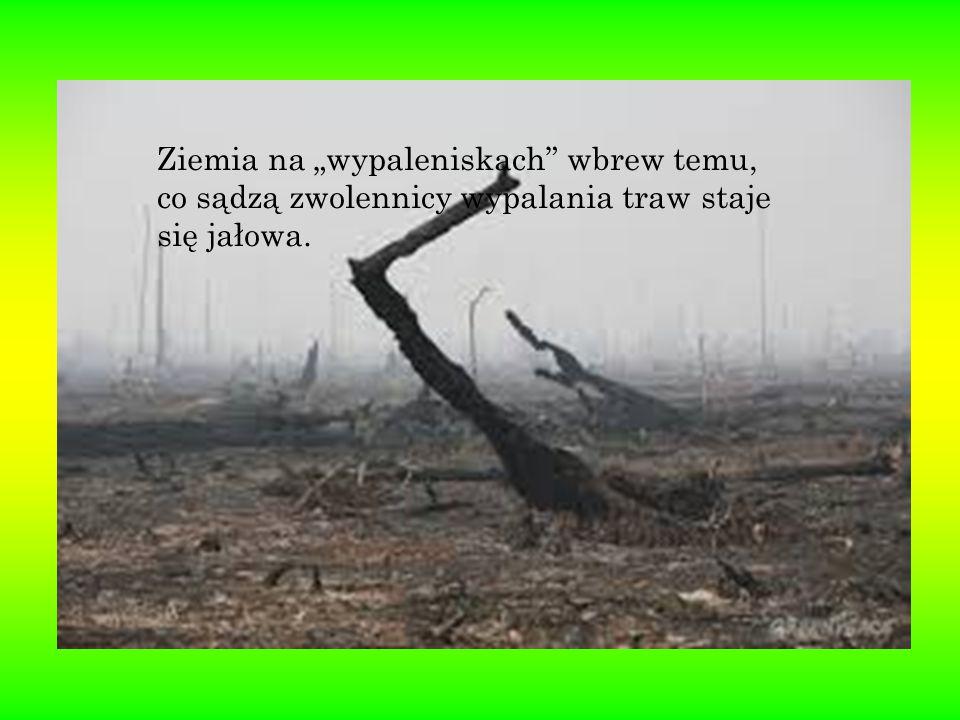 """Ziemia na """"wypaleniskach"""" wbrew temu, co sądzą zwolennicy wypalania traw staje się jałowa."""