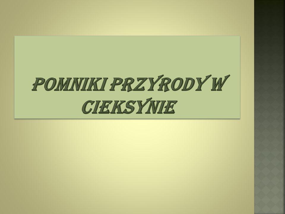  Cieksyn należy do nadleśnictwa Płońsk.