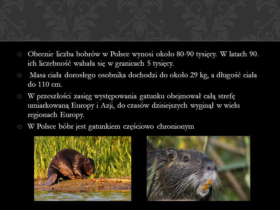 o Obecnie liczba bobrów w Polsce wynosi około 80-90 tysięcy. W latach 90. ich liczebność wahała się w granicach 5 tysięcy. o Masa ciała dorosłego osob