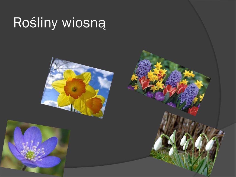 Rośliny wiosną