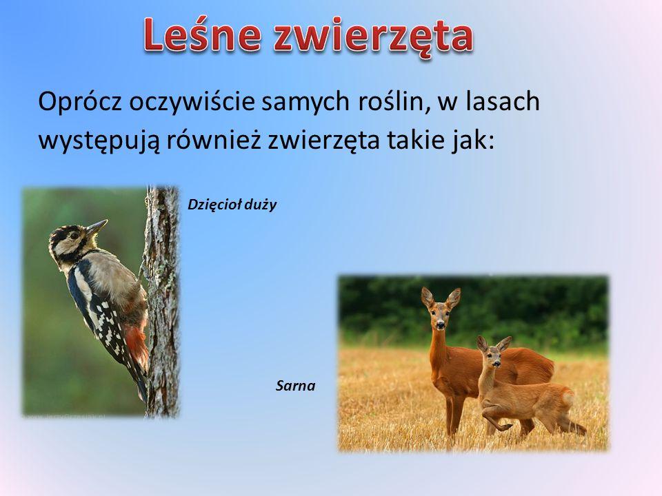 Oprócz oczywiście samych roślin, w lasach występują również zwierzęta takie jak: Dzięcioł duży Sarna