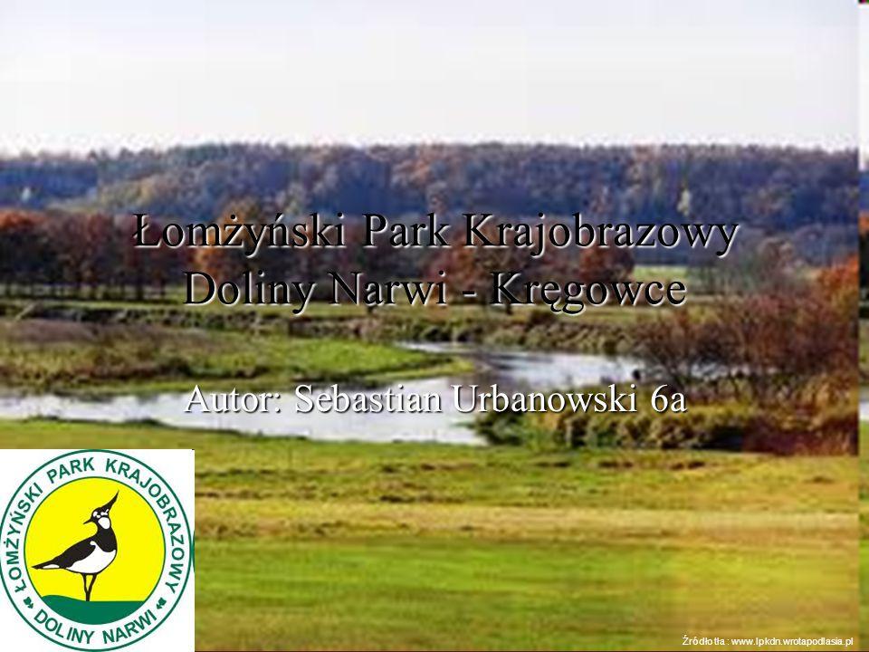 Łomżyński Park Krajobrazowy Doliny Narwi - Kręgowce Autor: Sebastian Urbanowski 6a Źródło tła : www.lpkdn.wrotapodlasia.pl