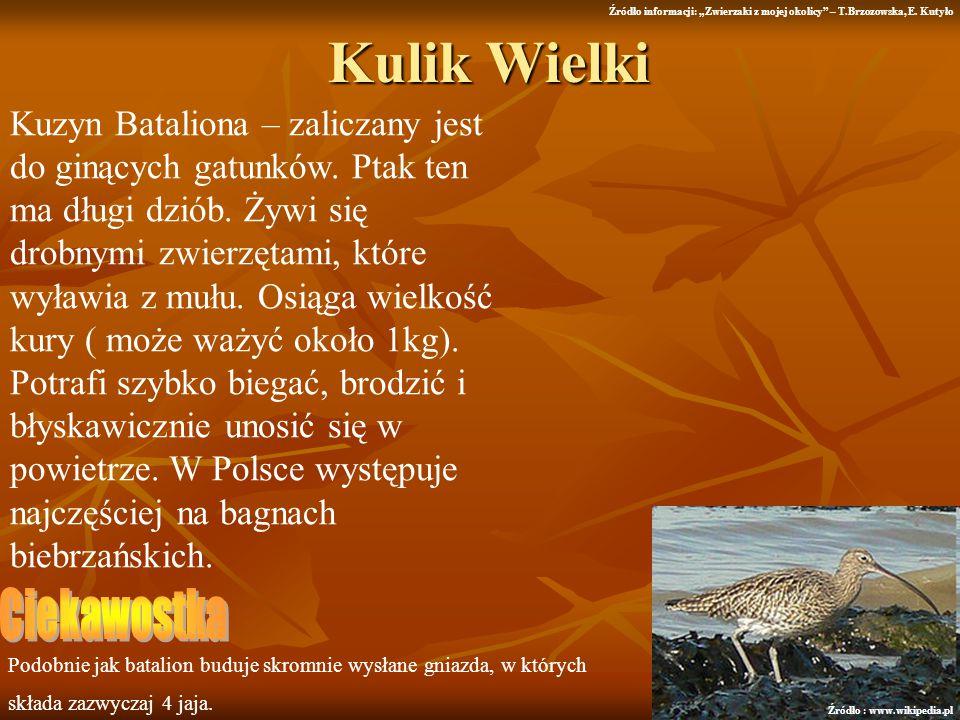 Kulik Wielki Kuzyn Bataliona – zaliczany jest do ginących gatunków. Ptak ten ma długi dziób. Żywi się drobnymi zwierzętami, które wyławia z mułu. Osią