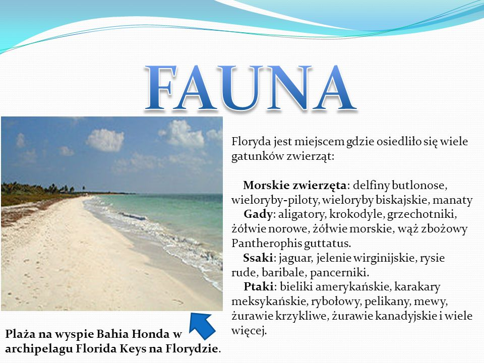 Floryda jest miejscem gdzie osiedliło się wiele gatunków zwierząt: Morskie zwierzęta: delfiny butlonose, wieloryby-piloty, wieloryby biskajskie, manat