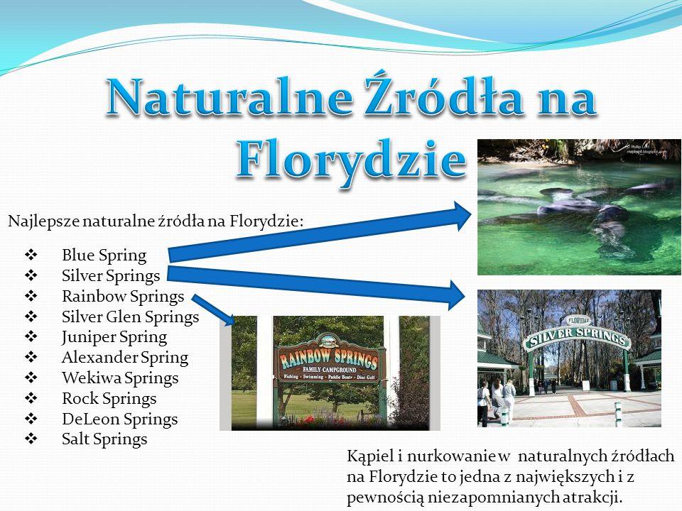 Kąpiel i nurkowanie w naturalnych źródłach na Florydzie to jedna z największych i z pewnością niezapomnianych atrakcji. Najlepsze naturalne źródła na