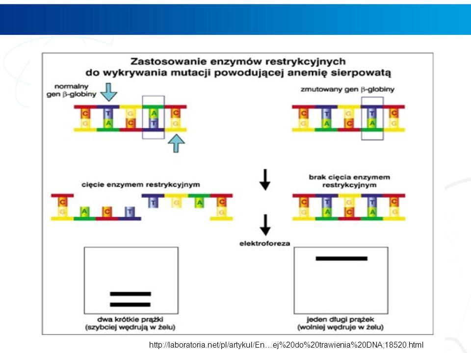 http://laboratoria.net/pl/artykul/En…ej%20do%20trawienia%20DNA;18520.html