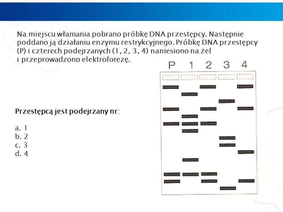 Na miejscu włamania pobrano próbkę DNA przestępcy.