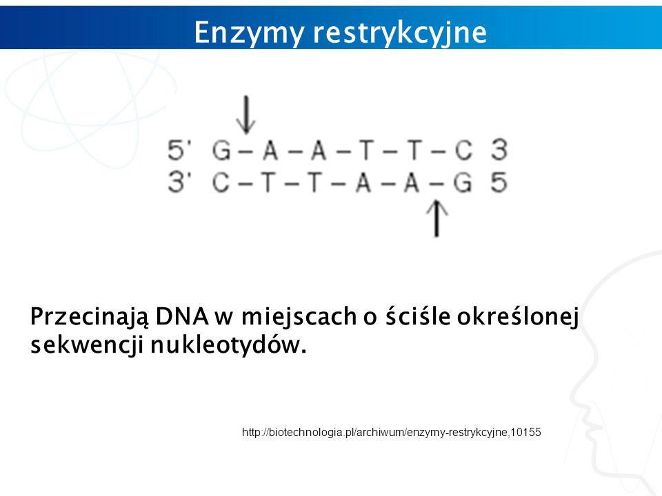 Enzymy restrykcyjne Przecinają DNA w miejscach o ściśle określonej sekwencji nukleotydów.