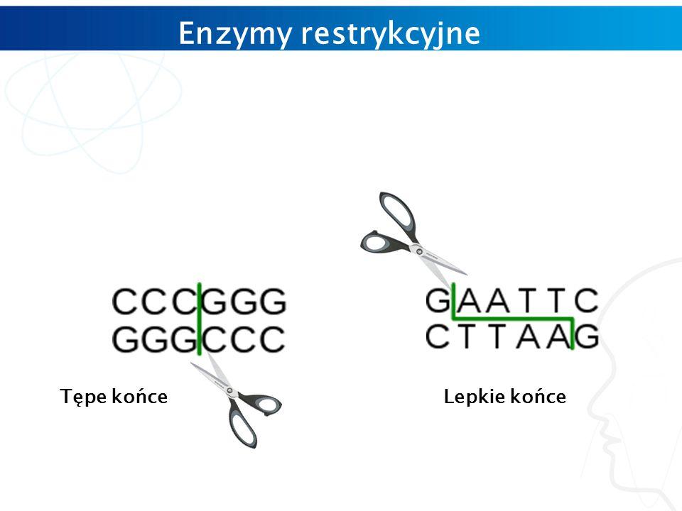 Tępe końceLepkie końce Enzymy restrykcyjne