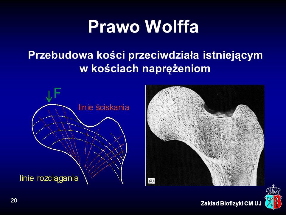 20 Zakład Biofizyki CM UJ Prawo Wolffa Przebudowa kości przeciwdziała istniejącym w kościach naprężeniom