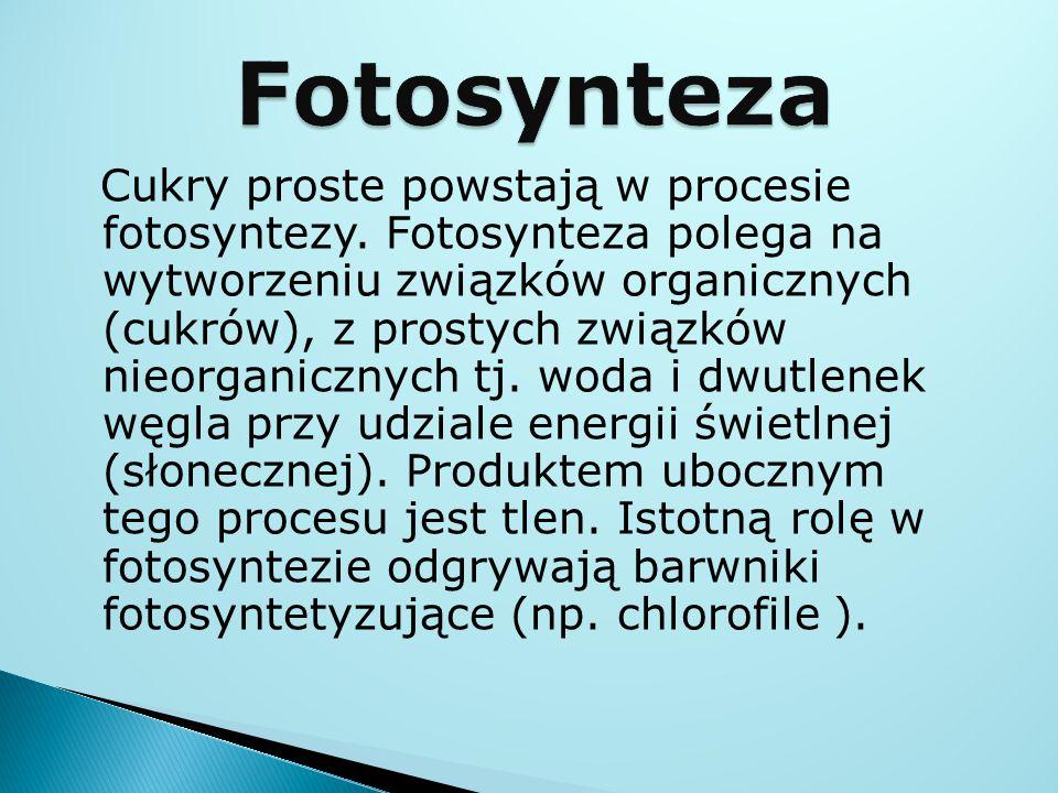 Cukry proste powstają w procesie fotosyntezy. Fotosynteza polega na wytworzeniu związków organicznych (cukrów), z prostych związków nieorganicznych tj
