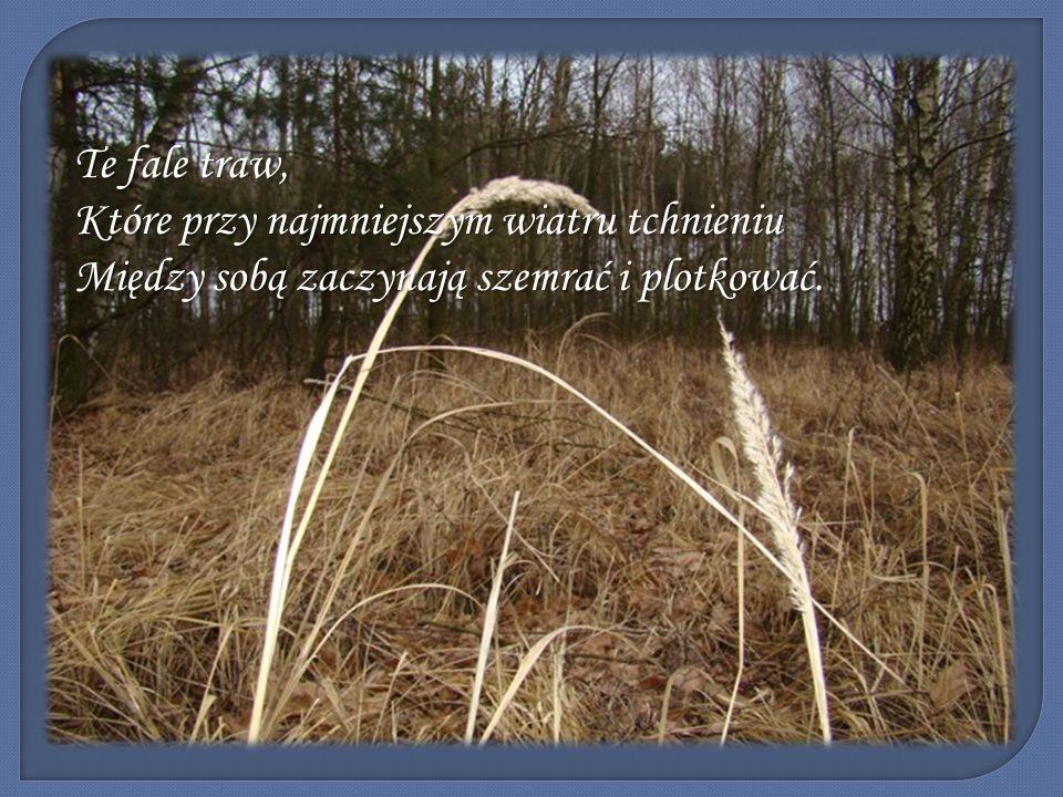 Te fale traw, Które przy najmniejszym wiatru tchnieniu Między sobą zaczynają szemrać i plotkować.