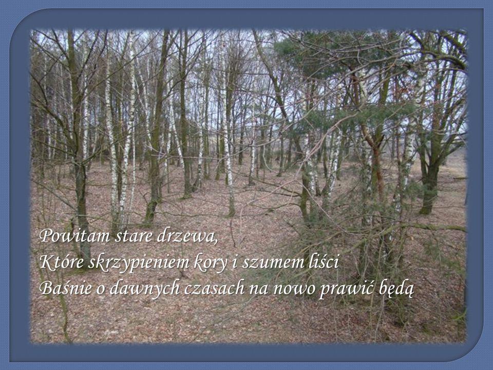 Powitam stare drzewa, Które skrzypieniem kory i szumem liści Baśnie o dawnych czasach na nowo prawić będą