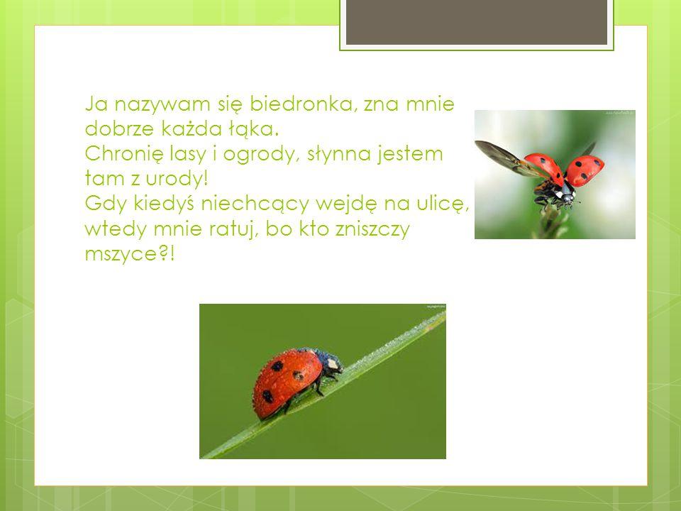 """""""Kto jest przyjacielem lasu Ja, Tomasz Dycha uczeń klasy VI Szkoły Podstawowej im."""