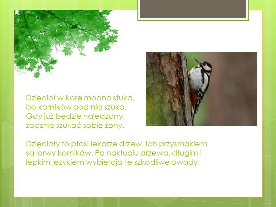 Cześć.Na imię mam Rudniczka. Mieszkam niedaleko w mrowisku, przy pniu po ściętym drzewie.