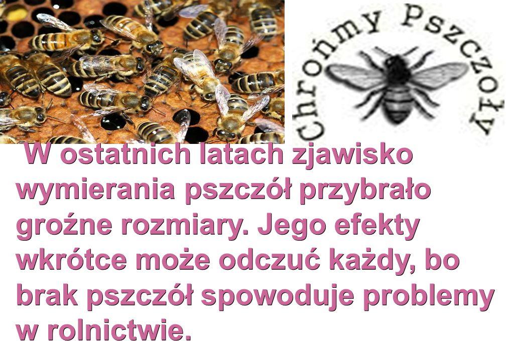 W ostatnich latach zjawisko wymierania pszczół przybrało groźne rozmiary. Jego efekty wkrótce może odczuć każdy, bo brak pszczół spowoduje problemy w