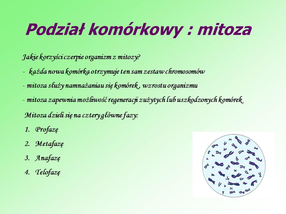 Podział komórkowy : mitoza Jakie korzyści czerpie organizm z mitozy? - każda nowa komórka otrzymuje ten sam zestaw chromosomów - mitoza służy namnażan