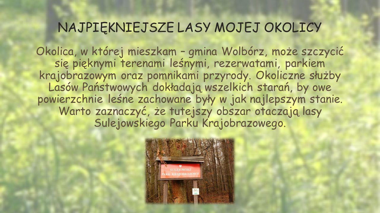 NAJPIĘKNIEJSZE LASY MOJEJ OKOLICY Okolica, w której mieszkam – gmina Wolbórz, może szczycić się pięknymi terenami leśnymi, rezerwatami, parkiem krajobrazowym oraz pomnikami przyrody.