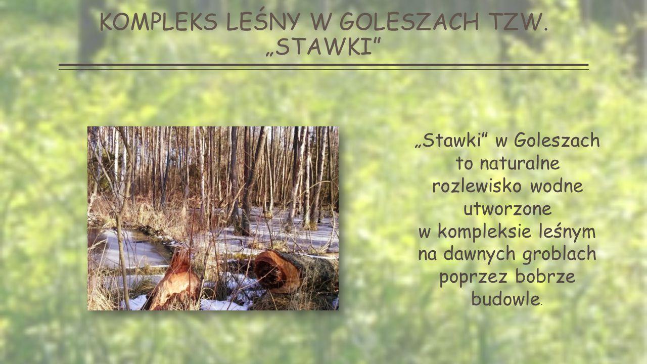 """KOMPLEKS LEŚNY W GOLESZACH TZW. """"STAWKI """"STAWKI ZIMĄ """"STAWKI LATEM"""
