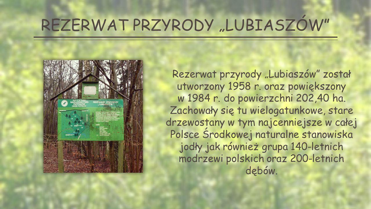 """REZERWAT PRZYRODY """"LUBIASZÓW Rezerwat przyrody """"Lubiaszów został utworzony 1958 r."""