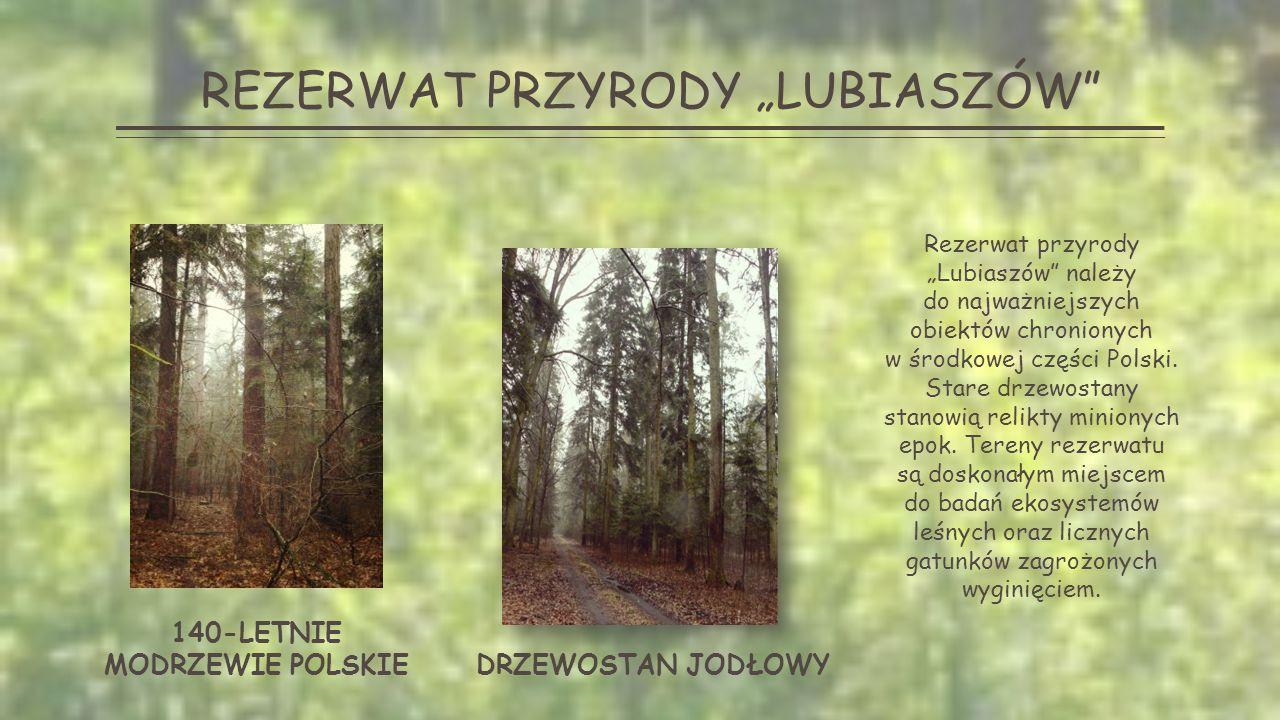 LASY W GOLESZACH Goleskie lasy bogate są w wszelkie błogosławieństwa przyrody.