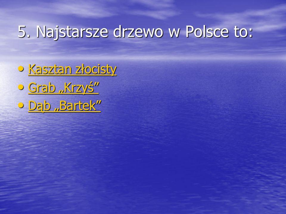 """5. Najstarsze drzewo w Polsce to: Kasztan złocisty Kasztan złocisty Kasztan złocisty Kasztan złocisty Grab """"Krzyś"""" Grab """"Krzyś"""" Grab """"Krzyś"""" Grab """"Krz"""