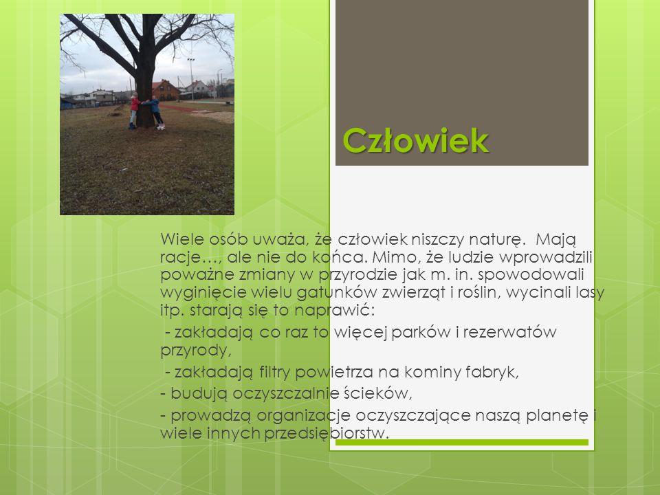 Ssaki Wiewiórka- na zimę część zapasów chowają w ziemi i o nich zapominają.