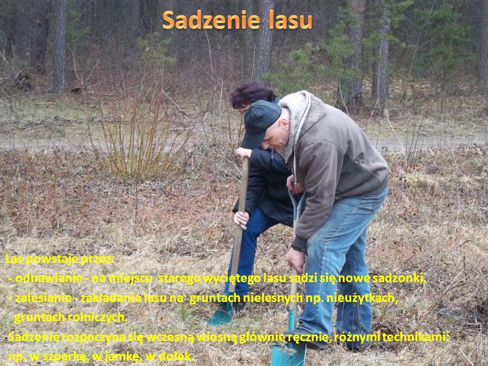 Sprawuje opiekę nad powierzonym mu leśnictwem. Dba o stan drzewostanu.