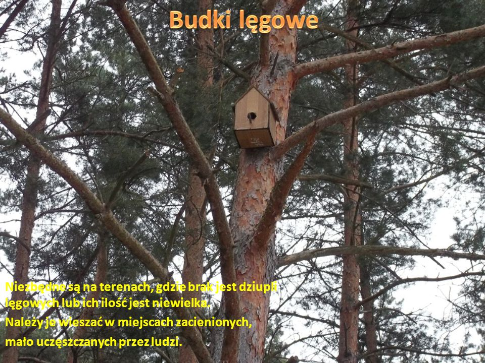 Każdy z nas doskonale wie, że nie można śmiecić w lesie. Bezwarunkowo należy dbać o jego czystość!